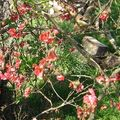 Premières fleurs de printemps......