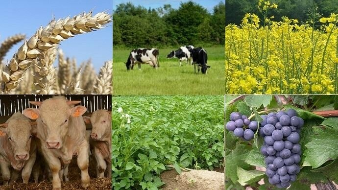 big_fiches_agriculture_2