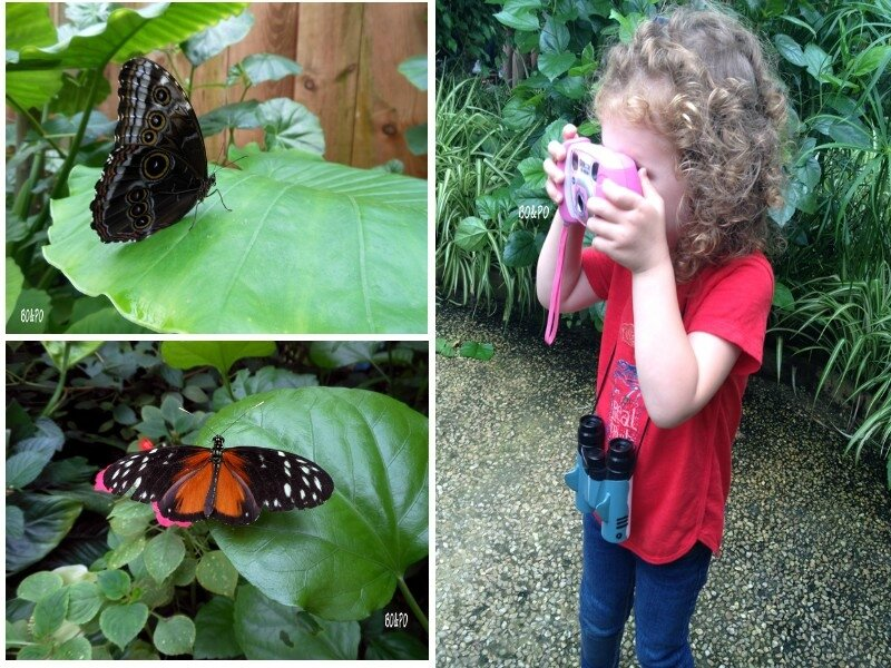 ile aux papillons 1
