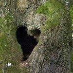 coeur-dans-la-nature-saint-valentin-6-150x150