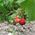 Rouge comme les fraises