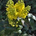 Fleurs suite 002