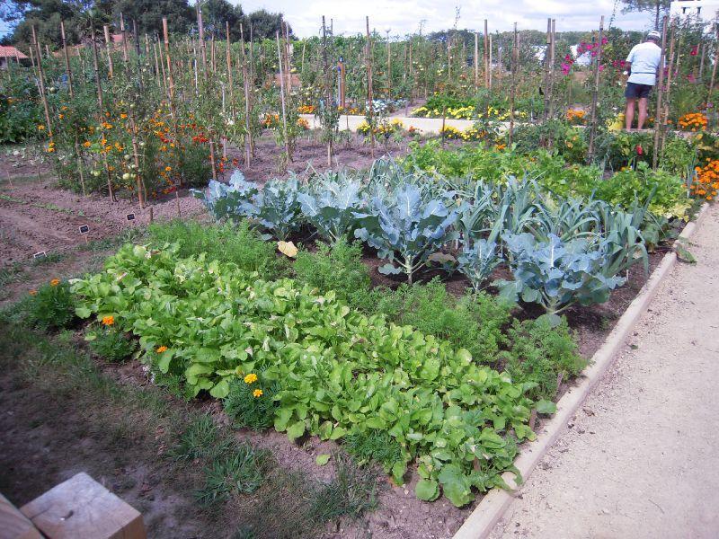 De beaux l gumes avec de beaux jardins mieux vivre au pissot - Comment faire un beau jardin potager ...