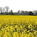 Coup de jaune