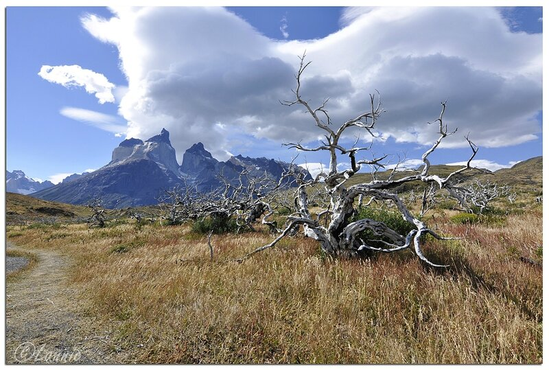 _Argentine_390_Chili_Torres_del_Paine_arbre