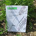 _Présentation des plantations (1)