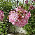 Windows-Live-Writer/Joli-printemps-au-jardin-_601C/20170402_102421_thumb