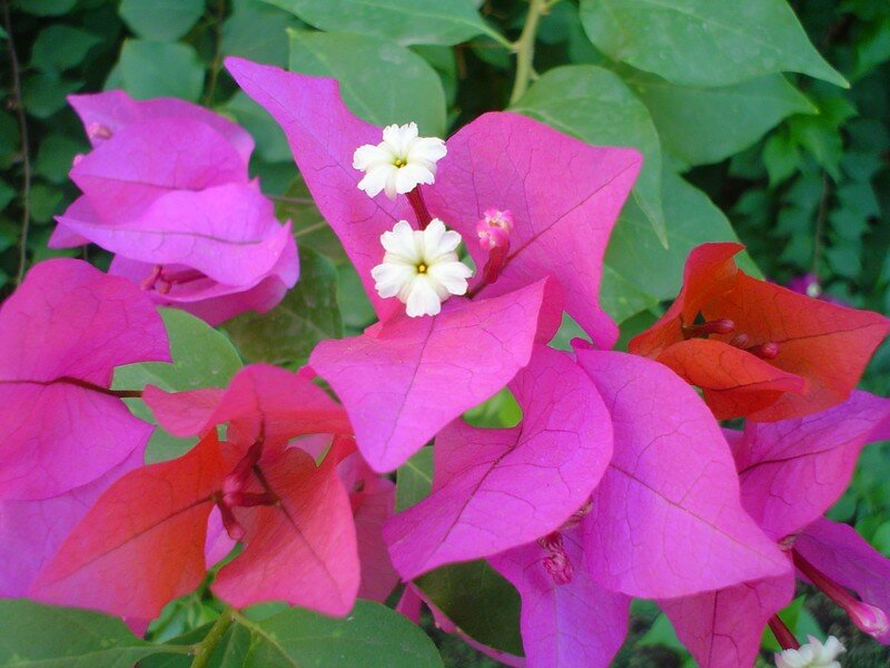 fleurs hourghada