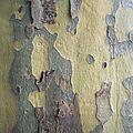 L'arbre : nos clichés