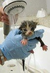 kittenbath