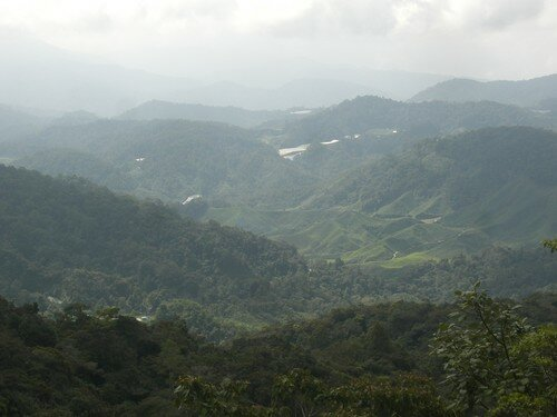 Cameron Highlands, trek