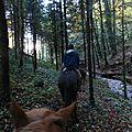 balade liberté - Mesnil Ozenne à cheval (44)