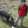 043 Alex et son cochon gourmand, Salinas