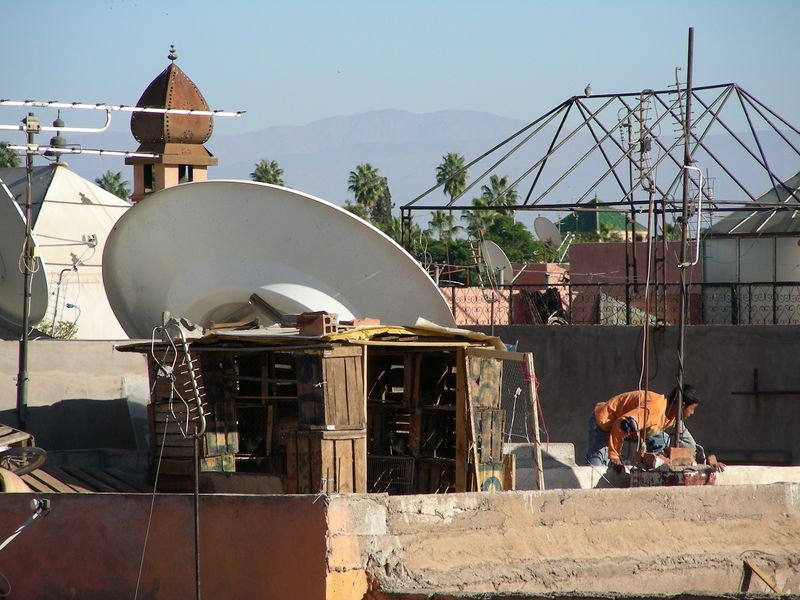 Sur le toits élevage de pigeon clandestin ?