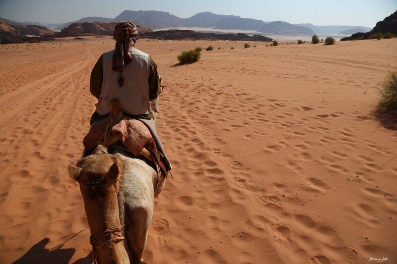 en chameau dans le wadi rum