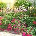 roses_greoux2