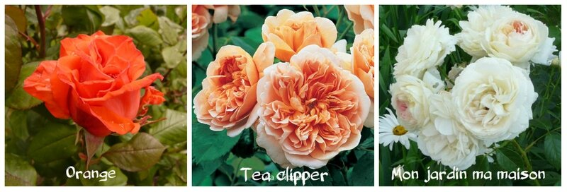 Tea clipper et cie