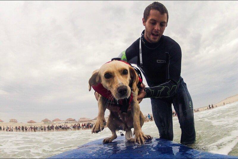 La-competition-de-chiens-surfeurs-au-Vieux-Boucau-dans-les-Landes, paris match