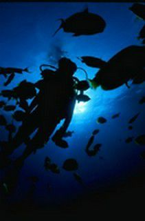 diving-at-night-1