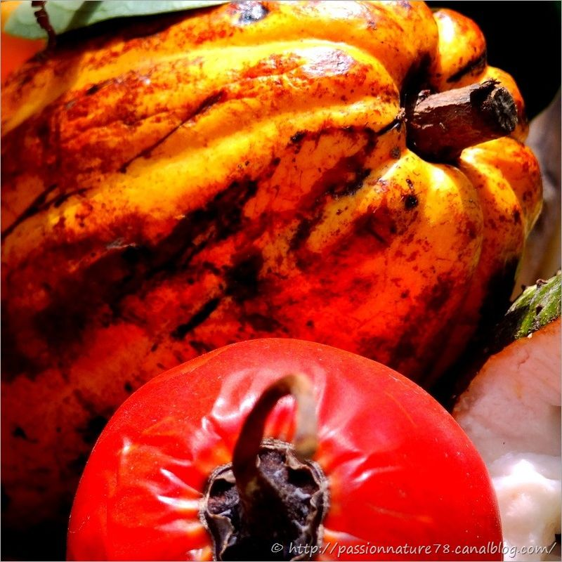 Fruits exotiques (20)