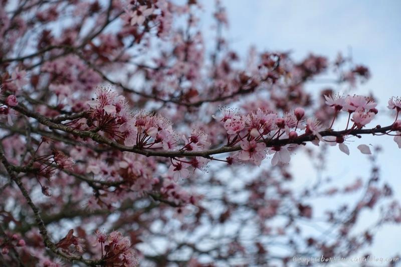 9mars fleurs roses