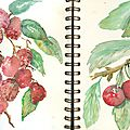 Pages 29 et 30 Fruits rouges des jardins
