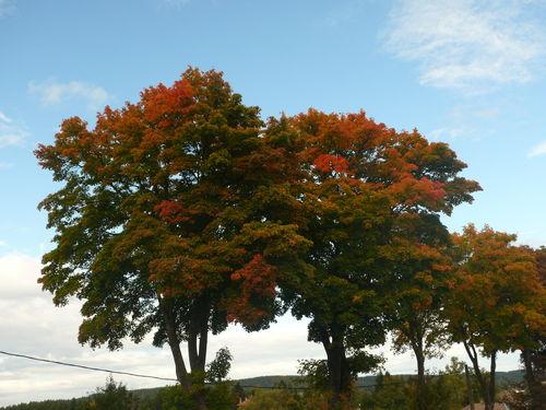 2008 10 06 Erables au couleurs d'automne