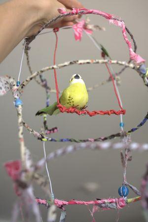 cage_oiseau3