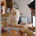 De la gourmandise plein les yeux ... du chat !
