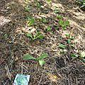 25 septembre - automne et salades à planter