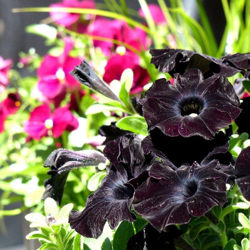 aa fleurs jardin7