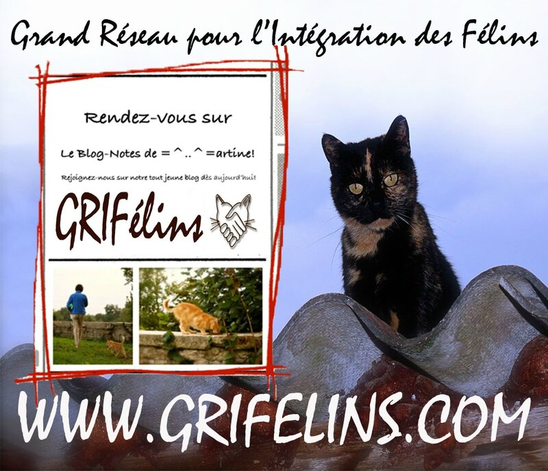 MIF-GRIF_image