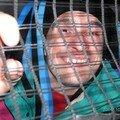 Un fou en cage