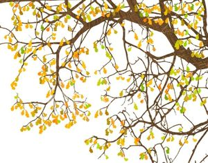 stock-illustration-4696822-branches