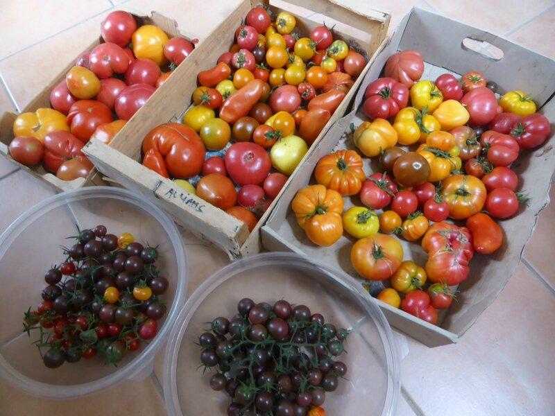 13-tomates (3)
