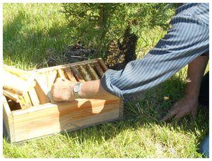 abeilles3 005