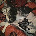 Exos forum d'écriture-2: une journée de l'animal de son choix: poupousse le chat