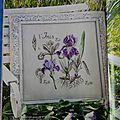Etude botanique : les iris (1)
