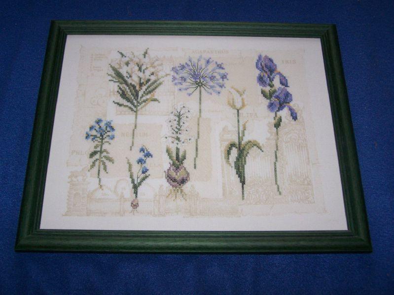 fleurs bleues lanarte (2)