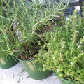 Mes herbes aromatiques