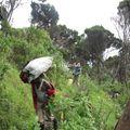 nyiragongo_montée au volcan_le long des fissures de 2002_003