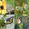 2010 déclarée année internationale de la biodiversité par l'organisation des nations unies
