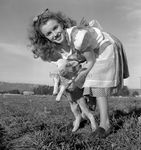 1945_meadow_sitting_sheep_by_dd_mmad131