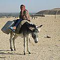un âne 151