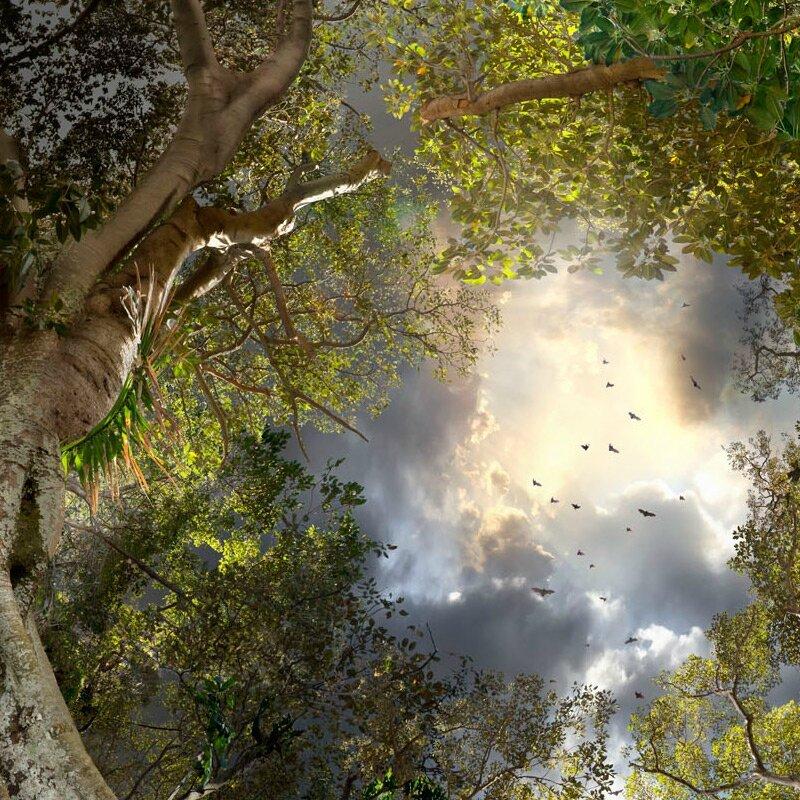 clairière forêt