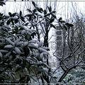 La neige dévore la ville dans le silence (1/10) - par v