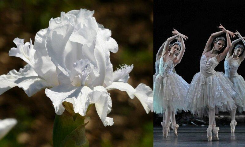 danse et fleurs (2)