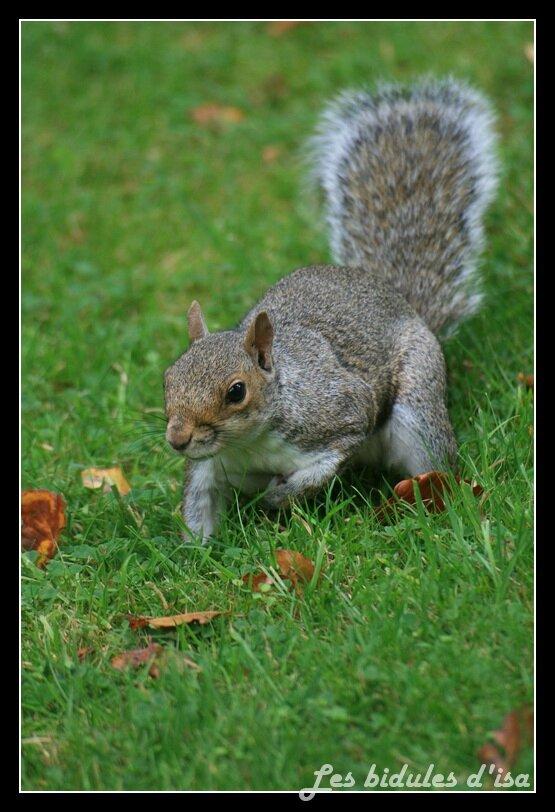 ecureuil (1)