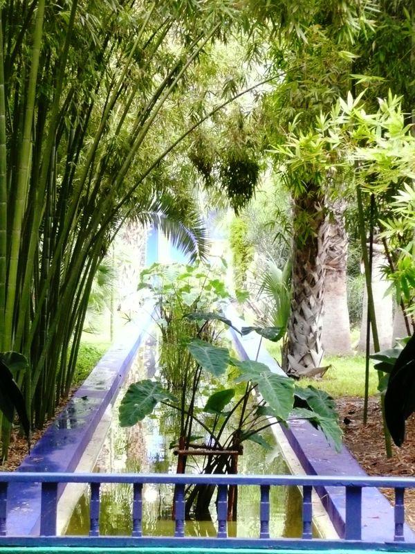 Le jardin majorelle marrakech la rouge for Le jardin majorelle