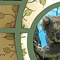 Koalas_detail2